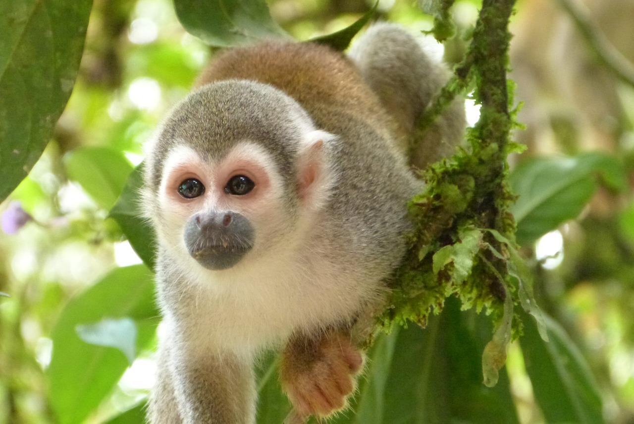 monkey-744440_1280